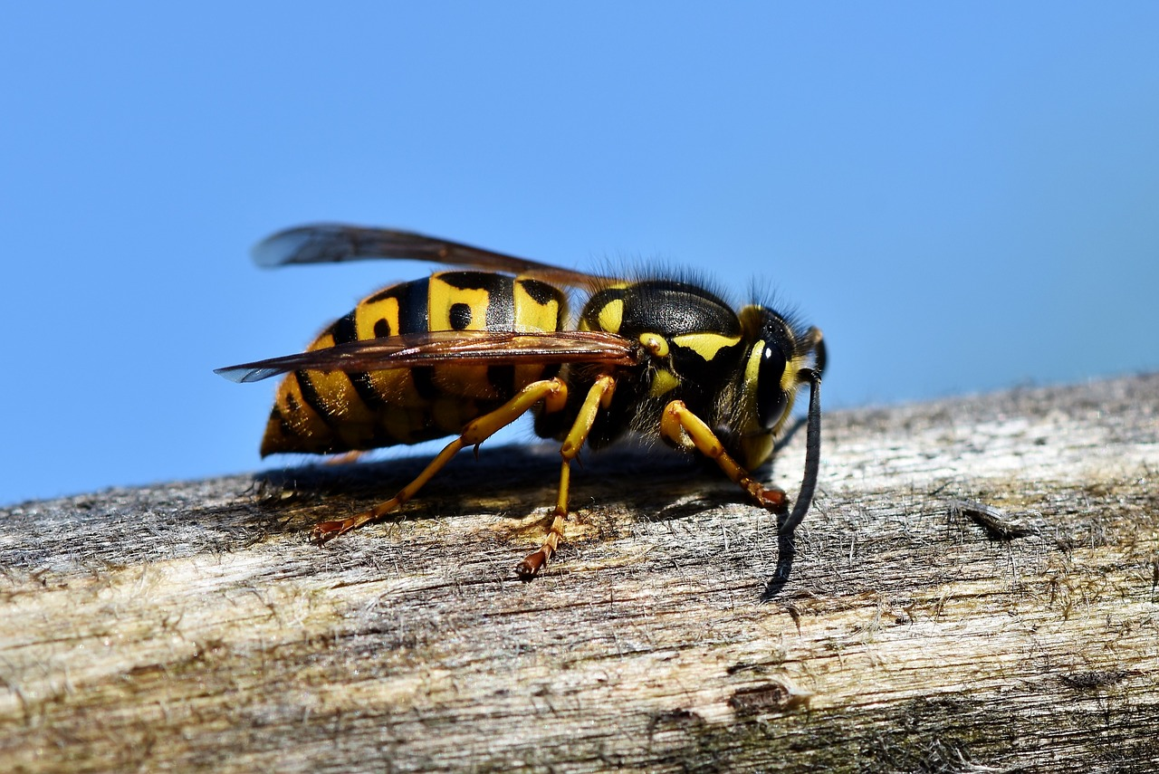 Hornet on top of a branch