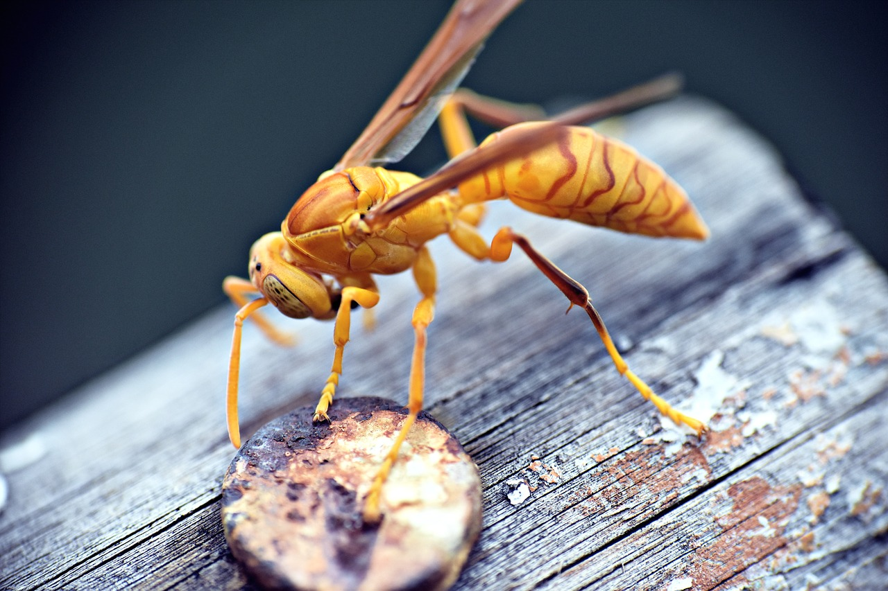 Paperwasp on top of a wood