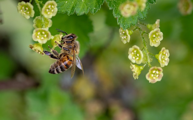 how to get rid of bees bee-honey-bee-insect-collect-polle