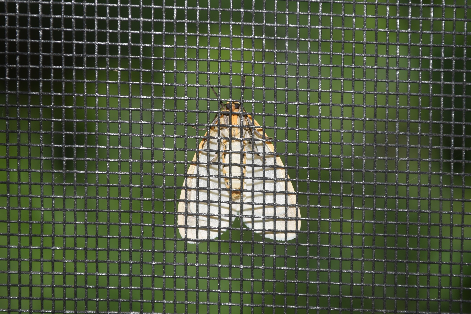 Moth on the screen