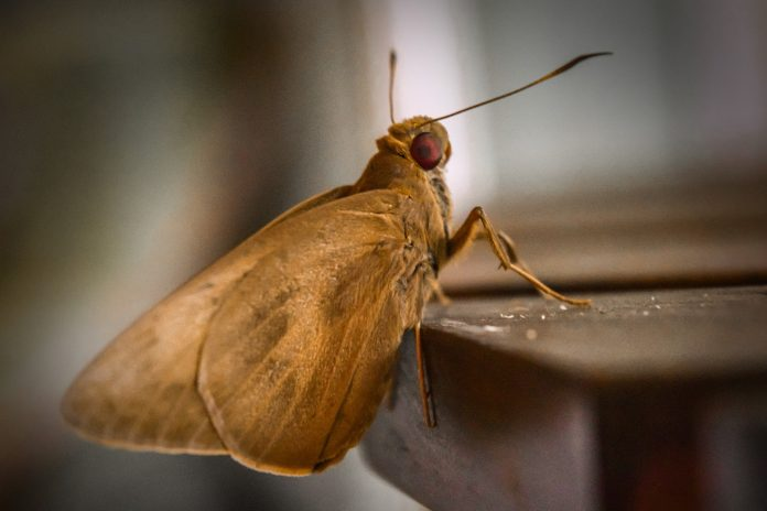 Moth at the table